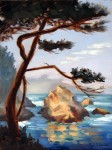 Graceful Pine Point Lobos ~ Prints Available (click here)